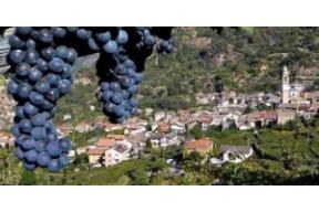 """Museo Dedicato al Vino """"Gran Masun"""""""