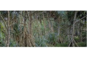 Exposition «PRENDRE COUTUME» de MATHIEU HAREL VIVIER