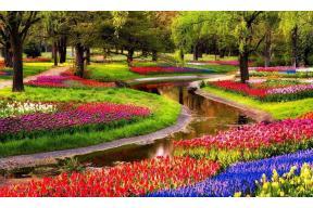 Keukenhof Tulip Festival 2021