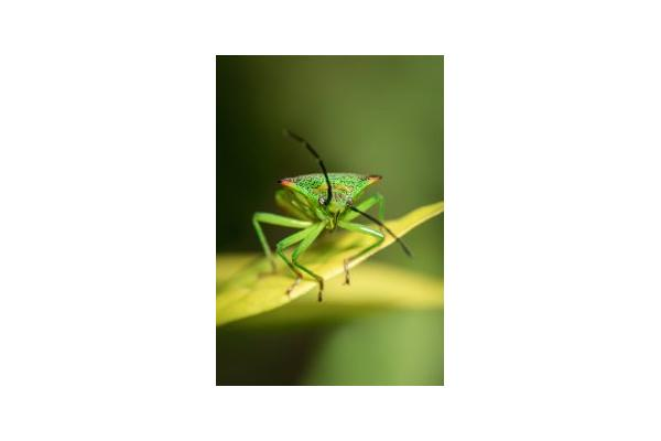 Outdoor Classroom: Macro & Close Up Photography